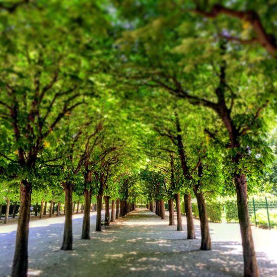 Summer in Vienna Wien Austria Summertime Park Green Trees Nature Sun