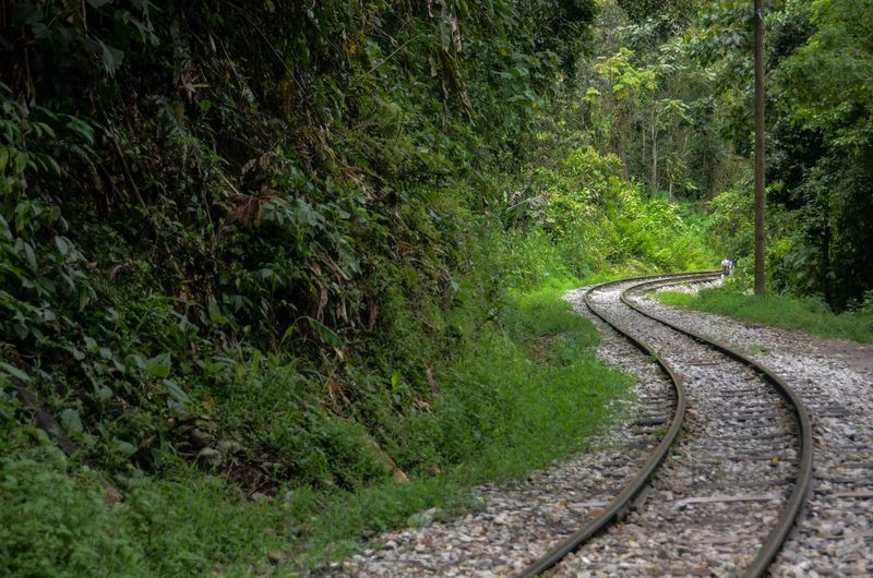 View of winding railroad track by trees