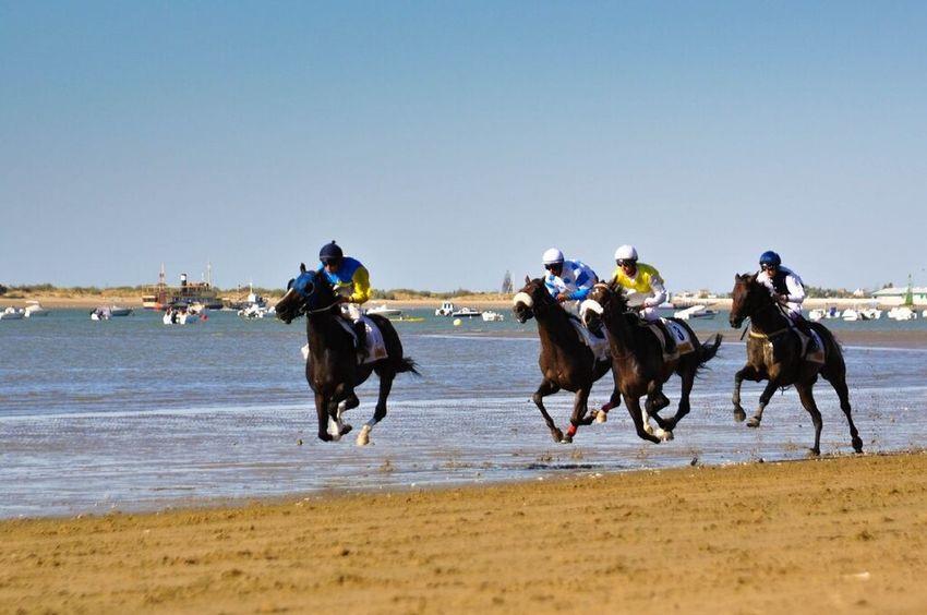Horse Horseback Riding Running Beach Riding Sea Speed Jockey Sand Sports Race Competition Sanlúcar De Barrameda Arts Culture And Entertainment Breathing Space