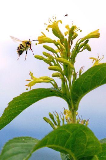 BEE Happy. Bee