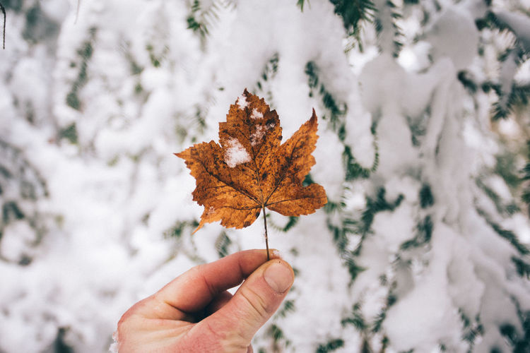 Close-up of hand holding maple leaf against snow covered trees