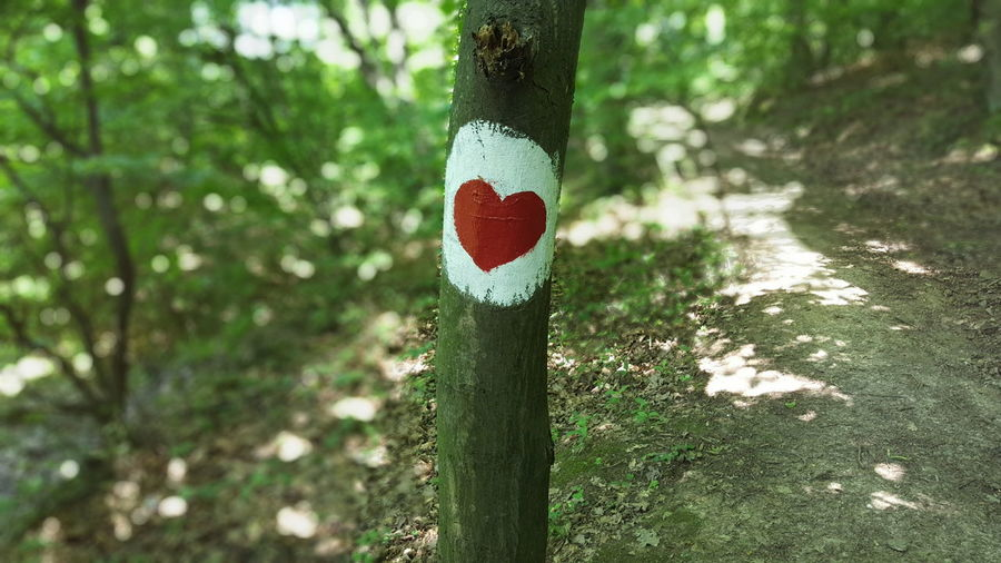 Heart Forest Fruška Gora Trail Forestwalk Painted Wood Red White Colourful Forrest Trail