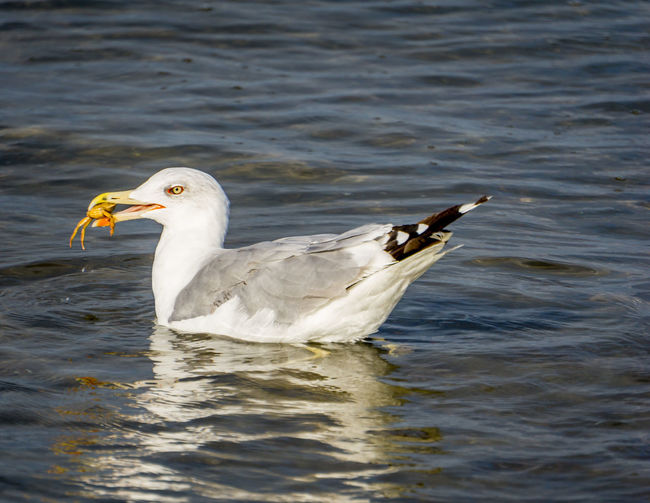 Seagull Animal Animal Themes Animal Wildlife Animals In The Wild Beach Bird Day No People One Animal Sand Sea Seagull Sky