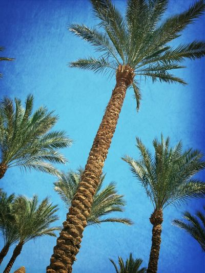 Palm Trees & perfect blue skies