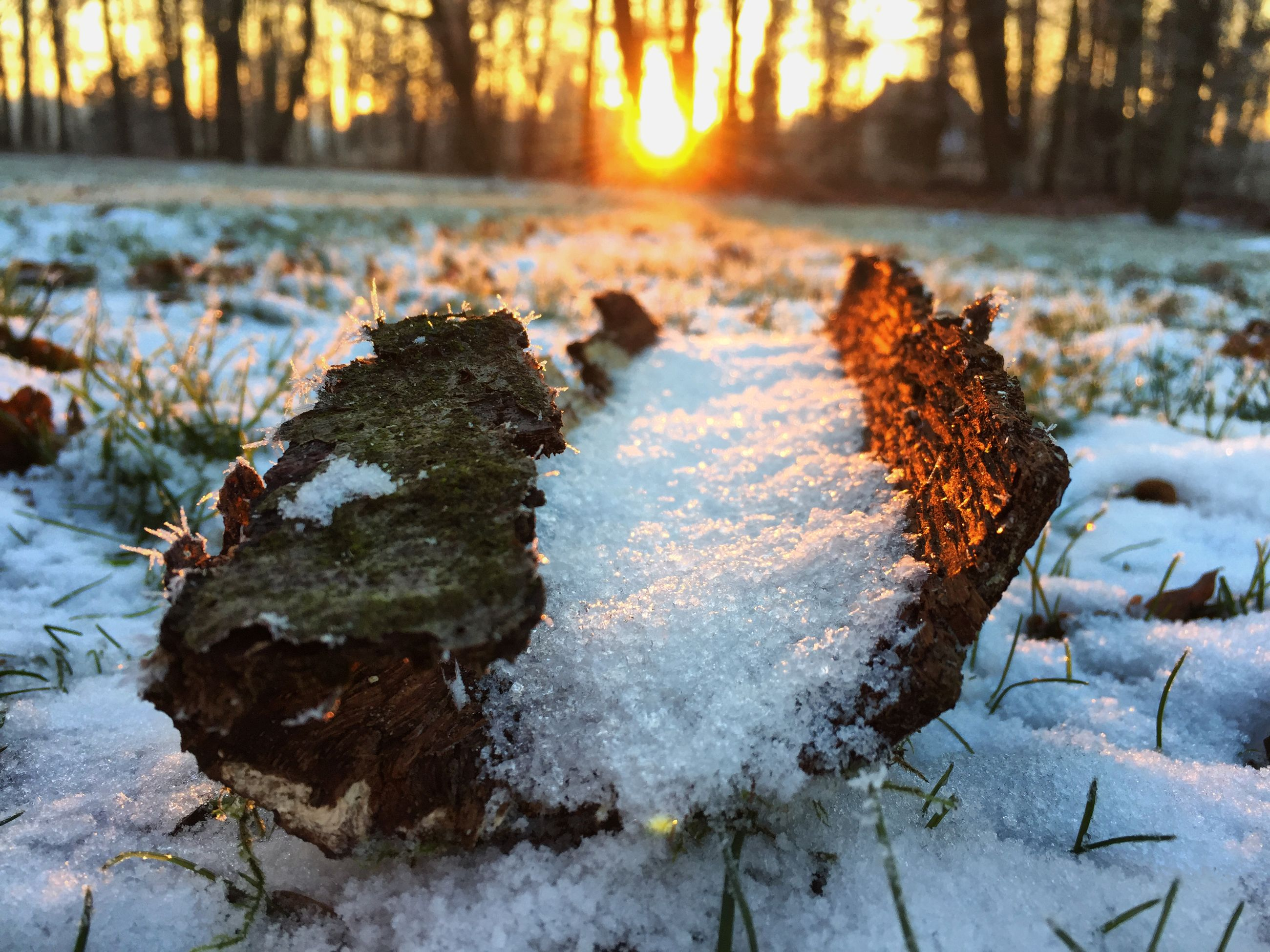 Snow On Driftwood During Sunset At Stadtpark Gutersloh