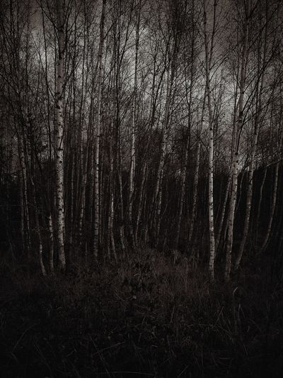 Backgrounds Textured  Pattern Monochrome Photography Blackandwhitephotography Blackandwhite Fine Art Photography Finland Suomi Forest Metsä Trees And Nature Trees Sky Tree Dark Photography Treescape Nature Marraskuu November Forest Photography Beauty In Nature