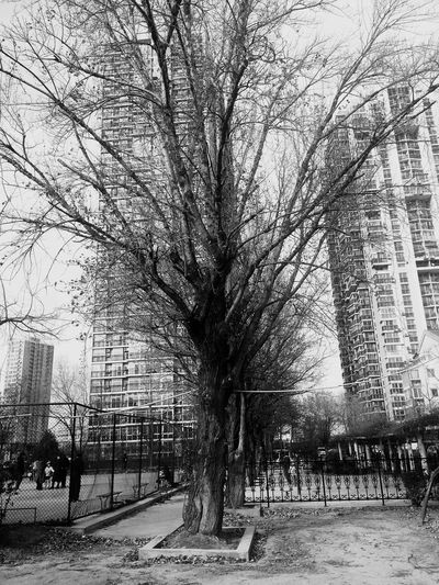 Black And White Friday Tree City Day