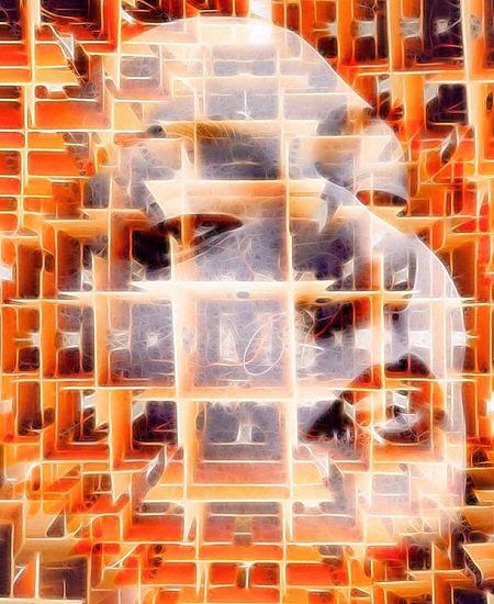 Photographic Approximation Facial Experiments Facial Fragments