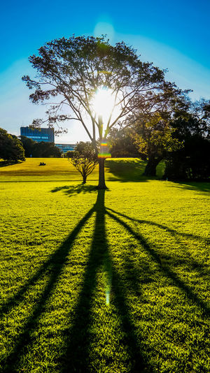 Shadow of tree during sunrise Morning Ray Sunny Beauty In Nature Day Field Grass Growth Landscape Nature No People Outdoors Park Scenics Shadow Sky Sun Sunbeam Sunlight Sunrise Sunset Tranquil Scene Tranquility Tree Yellow