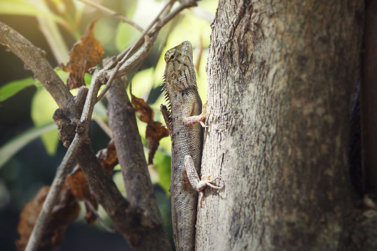chameleon Chameleon Eye Chameleon Green Beautiful Animal Themes Animal Wildlife Animals In The Wild Chameleon Chameleon On A Tree Chameleon Spirit Chameleon; Chameleon_collection Chameleons Close-up Day Lizard Nature No People One Animal Outdoors Reptile Tree Tree Trunk