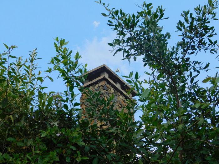 Chimney Chimney