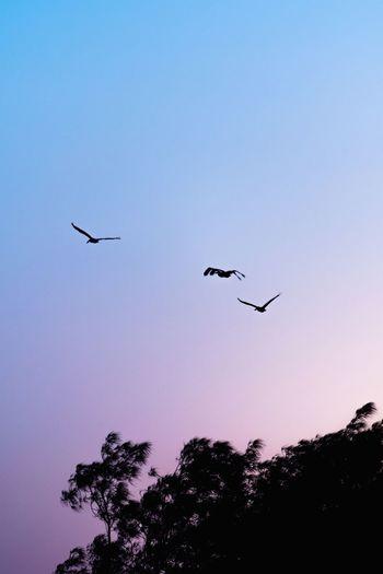 High flying birds. Bird Flying Tree Silhouette Bird Of Prey Flock Of Birds Mid-air Sky Animal Themes Migrating Freshwater Bird Group Of Animals Animal Migration Spread Wings #FREIHEITBERLIN