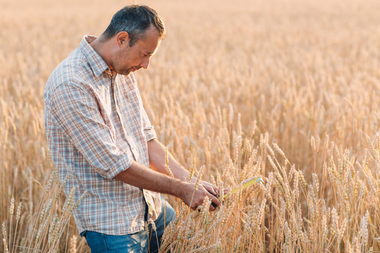 Full length of a man in wheat field