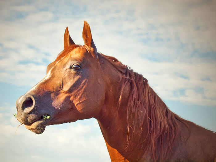 Low angle view of horse standing against cloudy sky
