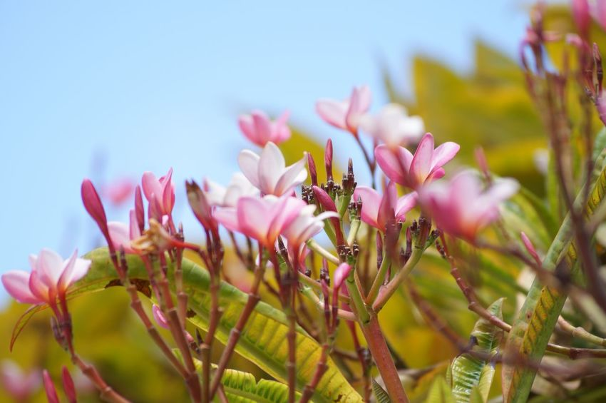 #pueblomagico #tapijulapa #trees Beauty In Nature Close-up Day Flower Fragility Freshness Nature Petal Pink Color Plant Sky