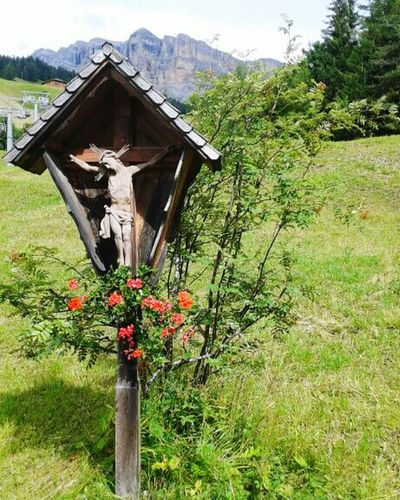 Nature Beauty In Nature Day Flower Holiday Flowers,Plants & Garden Nature Panoramic Beauty  Dolomites Italy Likeitaly Religious Architecture Religion And Tradition Religion Holiday Memories Holiday Time Mountain Montagne