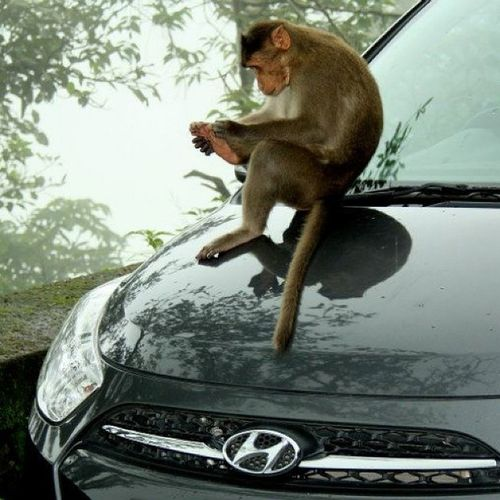 Reminds me of the series 'Planet of the Apes'. Clicked at Varanda Ghat, Maharashtra. Monsoon Mountainranges Monsoonmagic Momentsofmadness monkey planetoftheapes maharashtra incredibleindiaofficial incredibleindia india