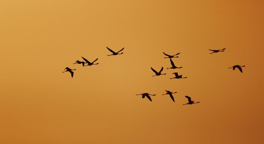 On Air Flemingo Air India Surat_igers Surat Photography Dumas Surat Sihouette  Birds Bird Photography Gujarat Abstract Canonphotography Canonindia EyeEmNewHere