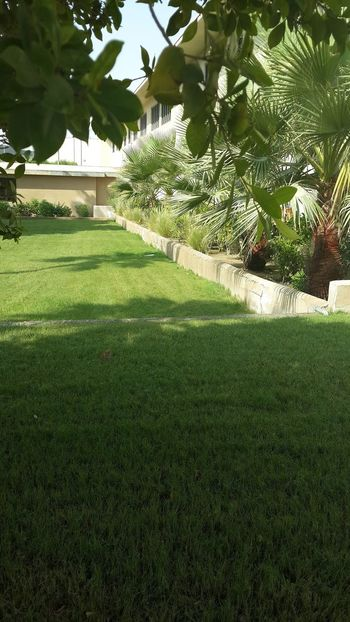 Grass Green Color No People Day Growth Tree Outdoors Nature Palm Tree Beauty In Nature