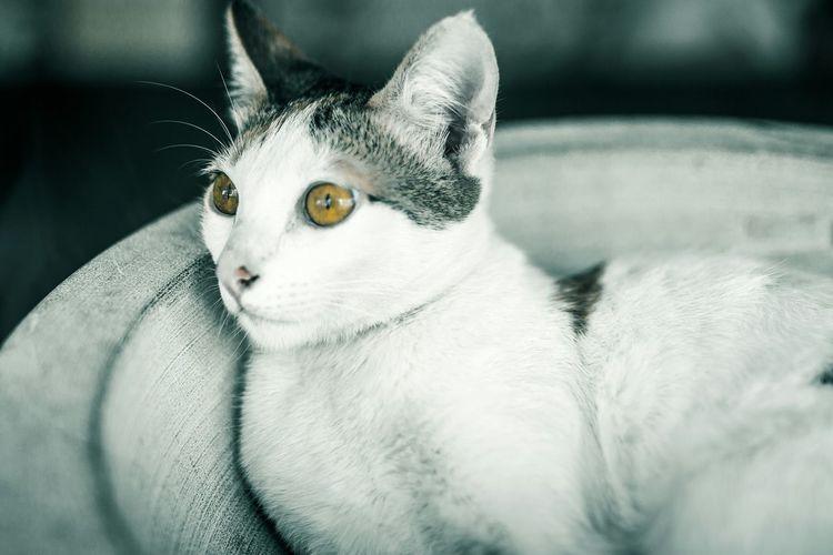 Cat Sigma35mm Sigma 35mm Art Eye4photography  EyeEm Best Shots Taiwan Open Edit Animal Photography Traveling