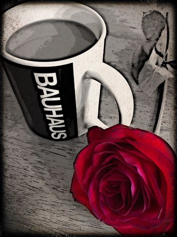 🥀🖤🎶♥️☕️ Redrose  Bauhaus Coffee Red Flower Flowering Plant No People