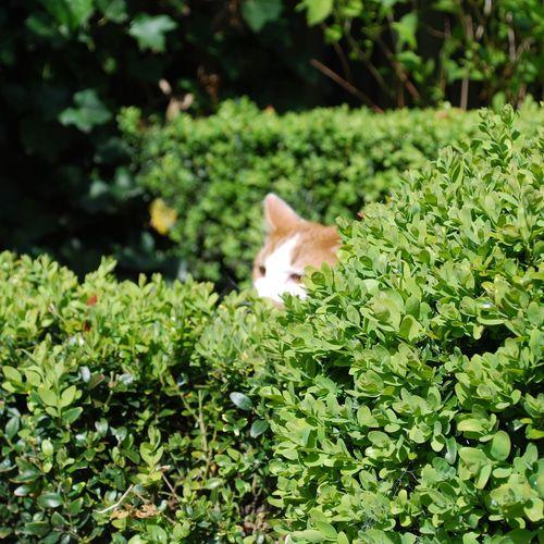 Catsofinstagram Exploring . Garden Photography Enjoying Life Voor Het Eerst Buiten Kiekeboe