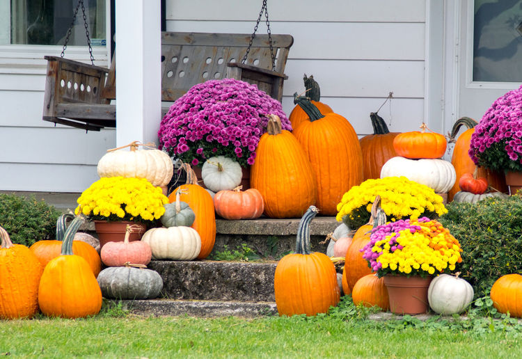 Pumpkins and flowers outside house