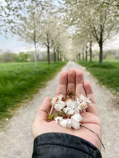 Midsection of person holding flowering plant by road