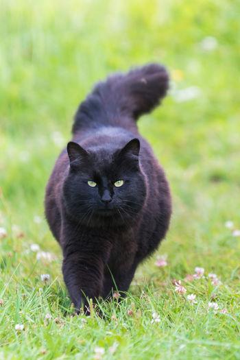 Black cat looking away on field