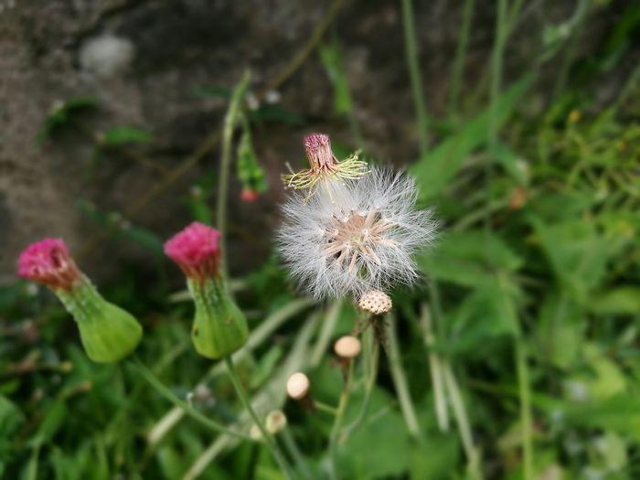 Nature Huawei P9. Flowers