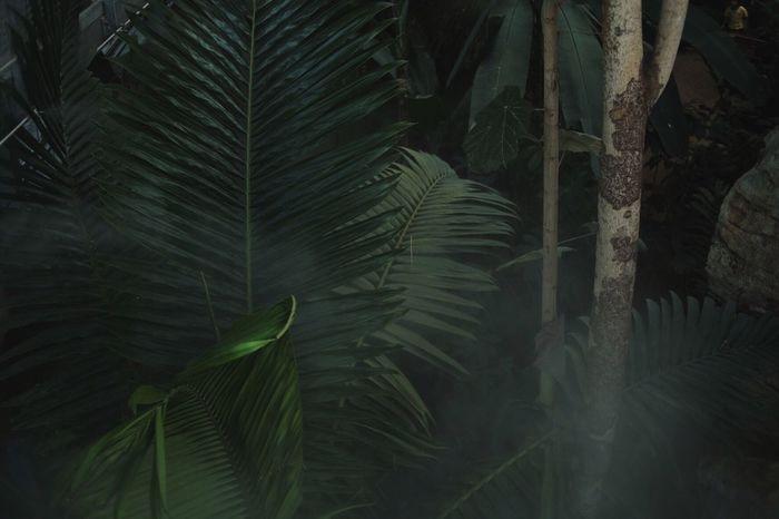 Nature Tree Leaf Plant Palm Tree Fog Nature Green Color Freshness