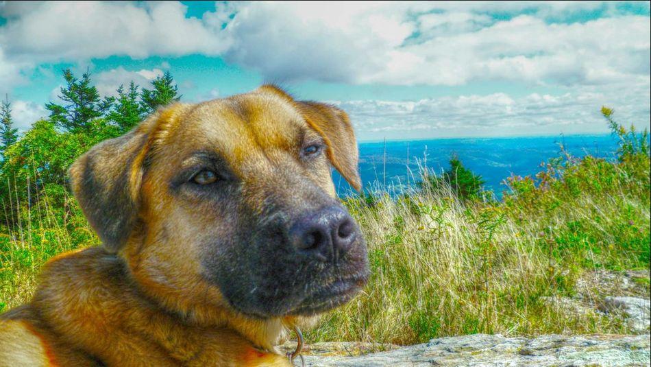 I Love My Dog Mount Greylock