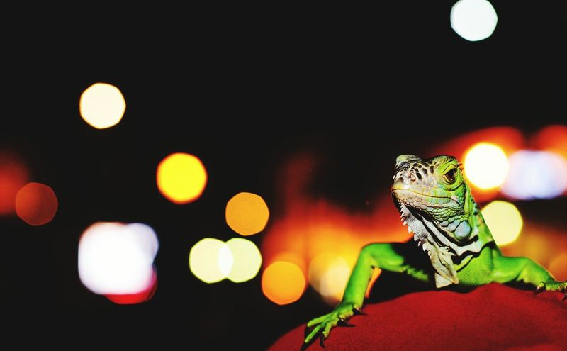 reptil First Eyeem Photo Taking Photos Enjoying Life Hanging Out Animals