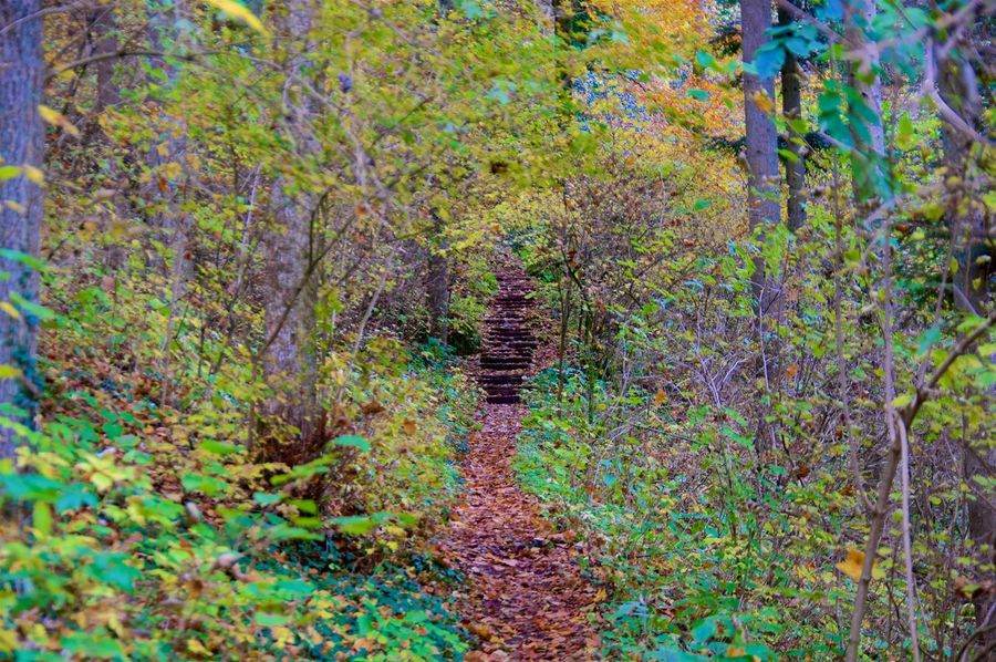 In the middle of the forest Autumn Beauty In Nature Beauty In Nature Colorful Day Forest Nature No People Outdoors Scenics Tree