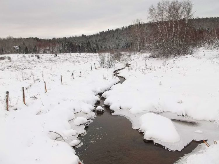 A babbling brook meandering through a snowy field near a fence line in wintertime. Babbling Brook Bare Tree Beauty In Nature Cold Temperature Day Fence Fence Line Frozen Landscape Meandering Stream Nature No People Outdoors Scenics Sky Snow Snowy Field Tranquil Scene Tranquility Tree Water Weather White Color Winter Winter Wonderland