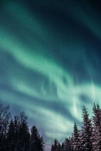 Green waves of north sky Tree Beauty In Nature Sky Night Tranquility No People Tranquil Scene Scenics - Nature Low Angle View Nature Star - Space Astronomy Space Silhouette Outdoors Coniferous Tree Northern Lights Aurora Borealis North Arctic Landscape Snow Winter Hanging Out Scenics