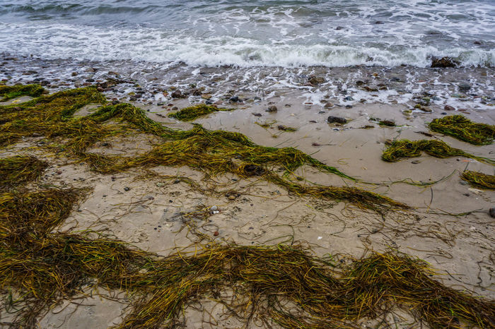 Water Sea Seagrass Beach Seascape Wet No People Beauty In Nature