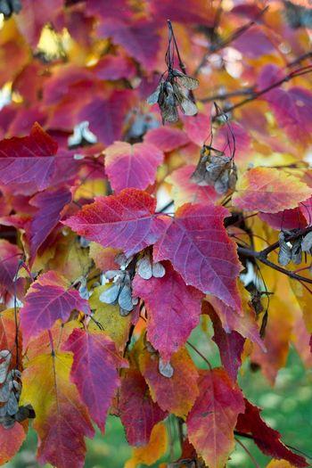осень Autumn Autumn Colors Nature