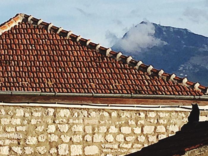 Born philosopher - cat on the roof Catoftheday Hello World Enjoying Life Mountain Tiled Roof  Eye4photography