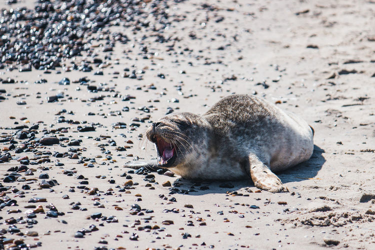 View of an animal sleeping on beach