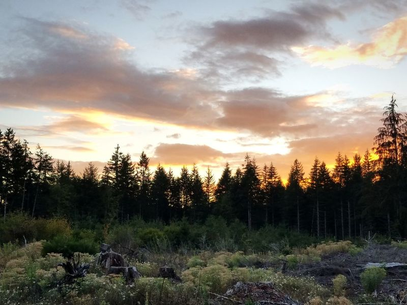 Tree Sunset Agriculture Rural Scene Forest Sky Landscape Cloud - Sky Grass