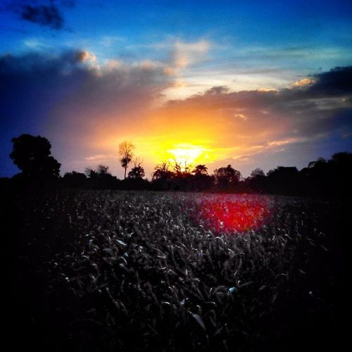 Coucher de soleil sur la campagne niortaise / sunset in #niort countryside Niort Drippin_awesome Urn_feature Visual_magic November_nature