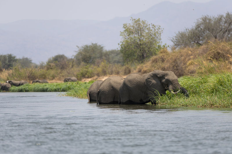 View of elephant in lake