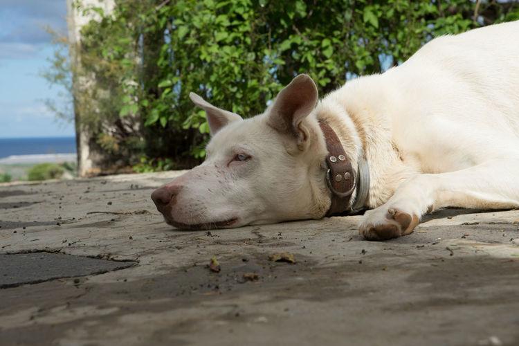 """Luna"" needs to chill down.. Dog Shadow The Week on EyeEm EyeEm Gallery EyeEm Animal Lover EyeEm Selects Water Beach Lying Down Relaxation Sea Sand Close-up Sky Long Shadow - Shadow Focus On Shadow"