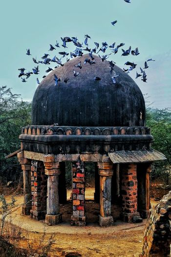 Neoncolors Heritagesite Birds Freedom Sonyshooter Lovephotography  Landscape Pastel Power Autumn Nature Check This Out Incredibleindia Indianheritage Delhimonuments