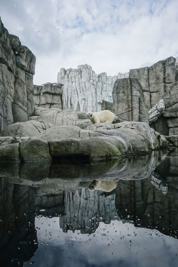Polar bear on rock by water against sky