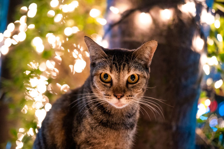 Close-up portrait of tabby cat on illuminated tree
