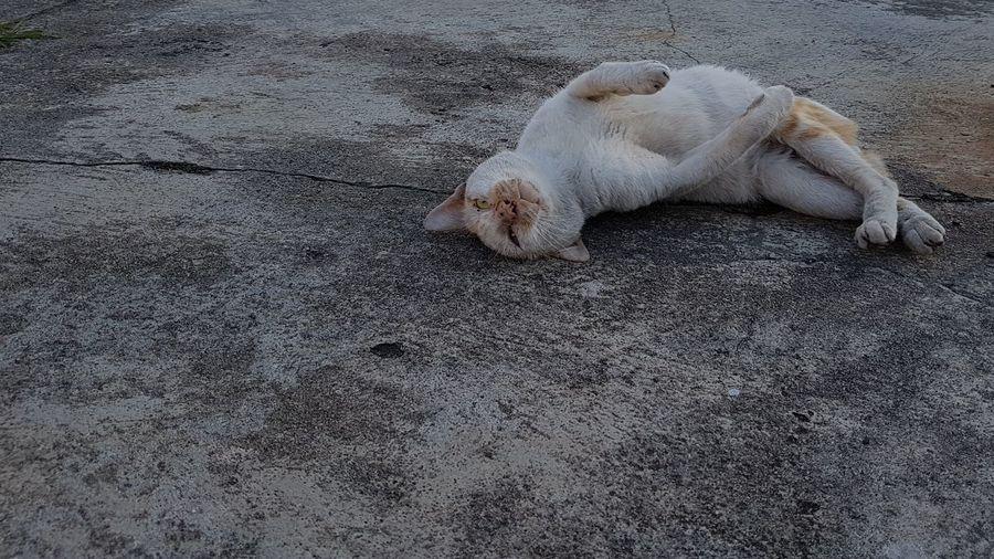 Ita monday ? No Samsung Galaxy S7 Edge S7 Edge Photography Morning Morning Sun Street Life Outdoors Beautiful Day Cat Cats Of EyeEm Cat♡