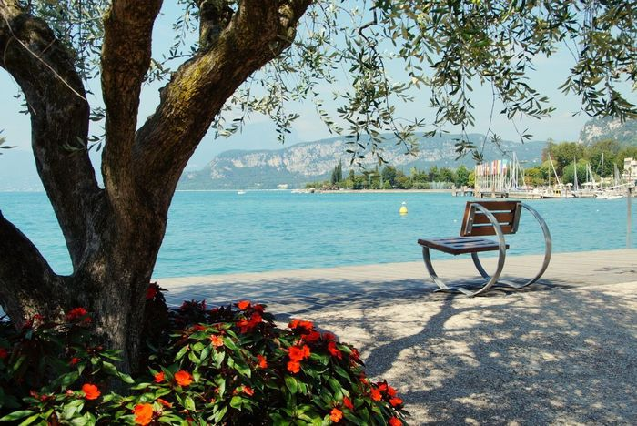 Tree Nature Flower Day Beauty In Nature Water Outdoors Chair Tree Trunk No People Growth Scenics Tranquility Beach Sky Gardasee Garda Lake Bardolino Sunny
