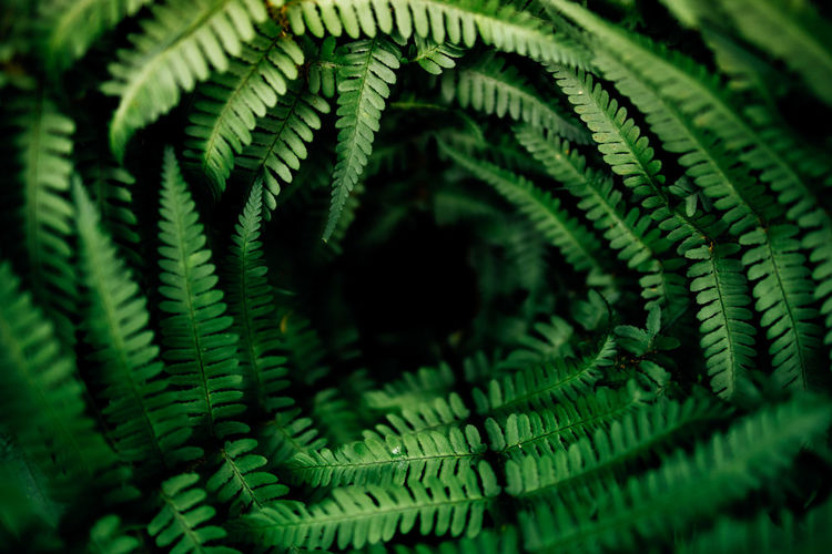 swirl Green Beautiful Nature Mezmerizing Vortex Fern Leaf Close-up Green Color Plant Botany Plant Life Petal In Bloom First Eyeem Photo My Best Photo